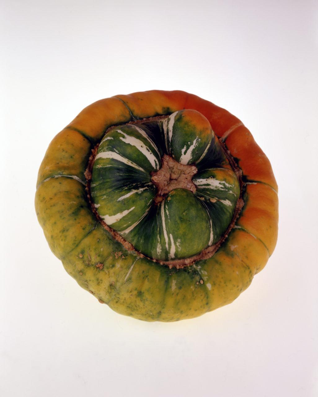 gourd colour